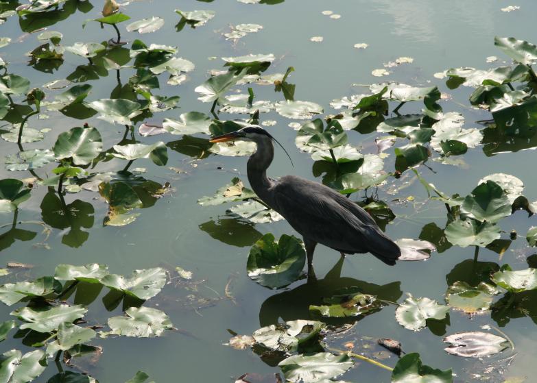 LDdA_Anais-voyage-dans-son-assiette-USA_Everglades_Anhinga_Trail_03
