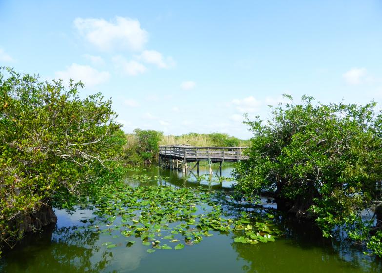 LDdA_Anais-voyage-dans-son-assiette-USA_Everglades_Anhinga_Trail_04