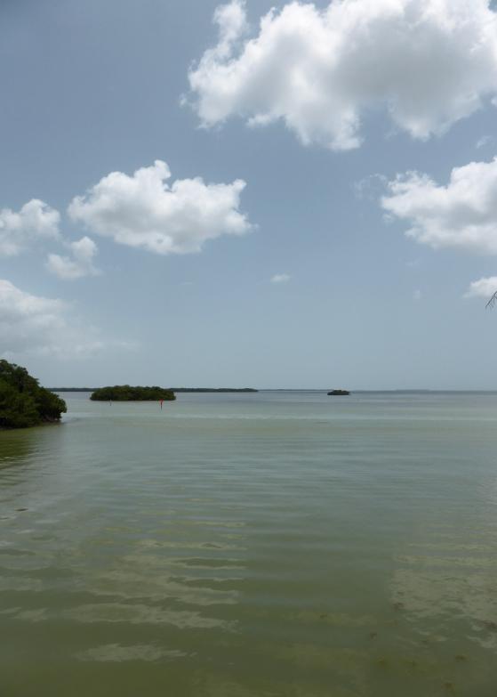 LDdA_Anais-voyage-dans-son-assiette-USA_Everglades_Flamingo