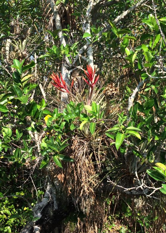 LDdA_Anais-voyage-dans-son-assiette-USA_Everglades_flowers