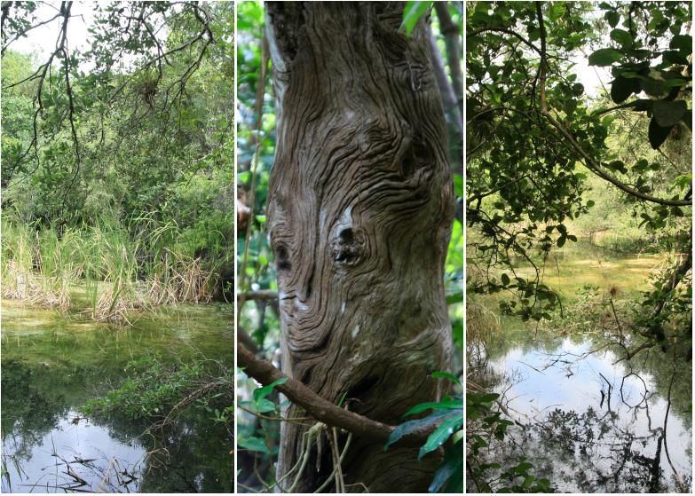 LDdA_Anais-voyage-dans-son-assiette-USA_Everglades_Gumbo_Limbo_Trail