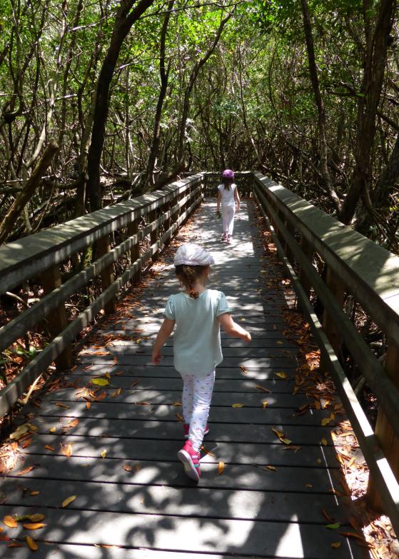 LDdA_Anais-voyage-dans-son-assiette-USA_Everglades_Mahogany_Hammock_01