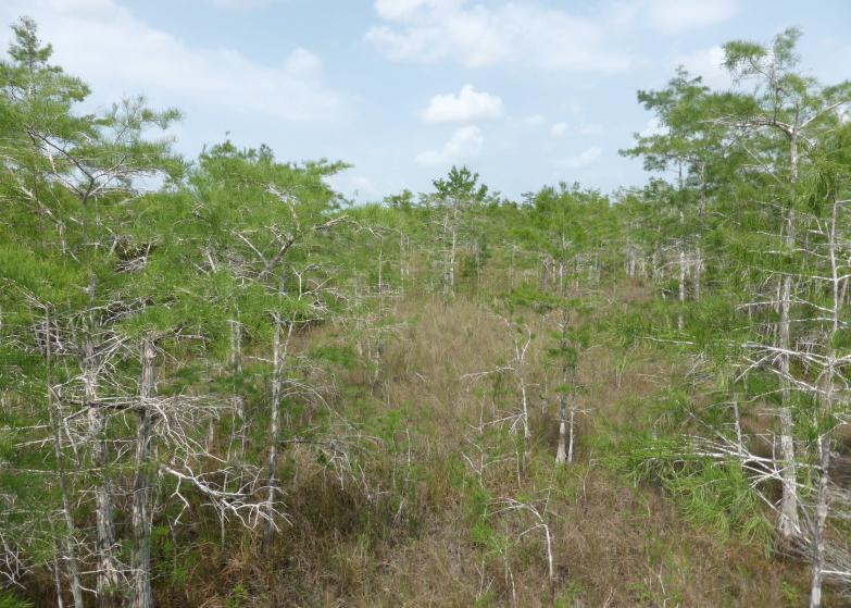 LDdA_Anais-voyage-dans-son-assiette-USA_Everglades_Pa-hay-okee Overlook_01