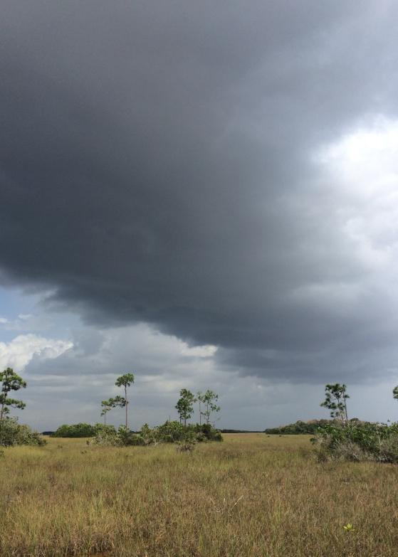 LDdA_Anais-voyage-dans-son-assiette-USA_Everglades_Pa-hay-okee Overlook_02
