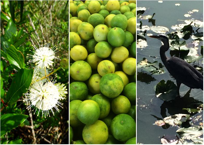LDdA_Anais-voyage-dans-son-assiette-USA_Everglades_selection