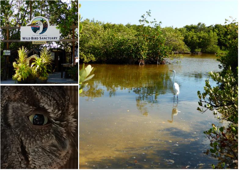 LDdA_Anais-voyage-dans-son-assiette-USA_Florida_Keys_Wild_Bird_Sanctuary