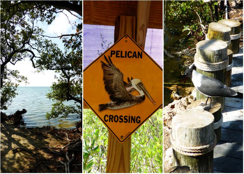 LDdA_Anais-voyage-dans-son-assiette-USA_Florida_Keys_Wild_Bird_Sanctuary_2