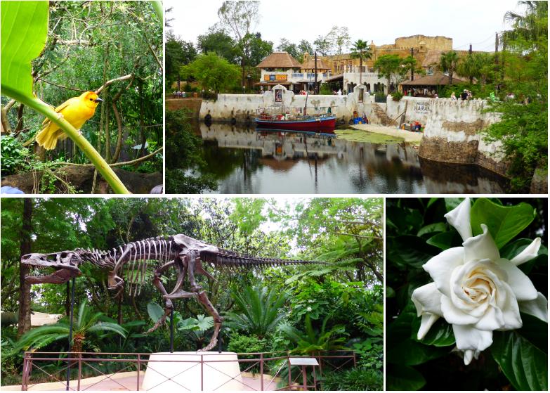 LDdA_Anais-voyage-dans-son-assiette_USA_Orlando_Animal_kingdom_02