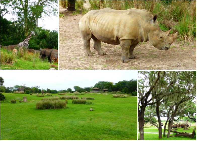 LDdA_Anais-voyage-dans-son-assiette_USA_Orlando_Animal_kingdom_Savane