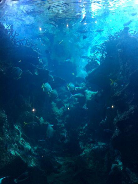 La_cite_de_la_mer_Aquarium_visite_coulisse_13