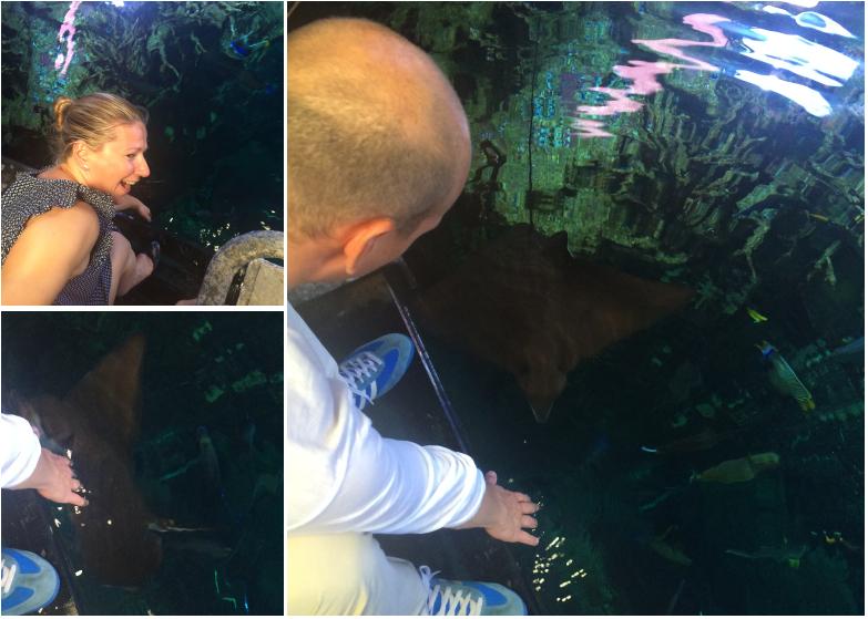 La_cite_de_la_mer_Aquarium_visite_coulisse_15