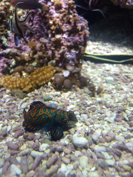 La_cite_de_la_mer_Aquarium_visite_coulisse_3