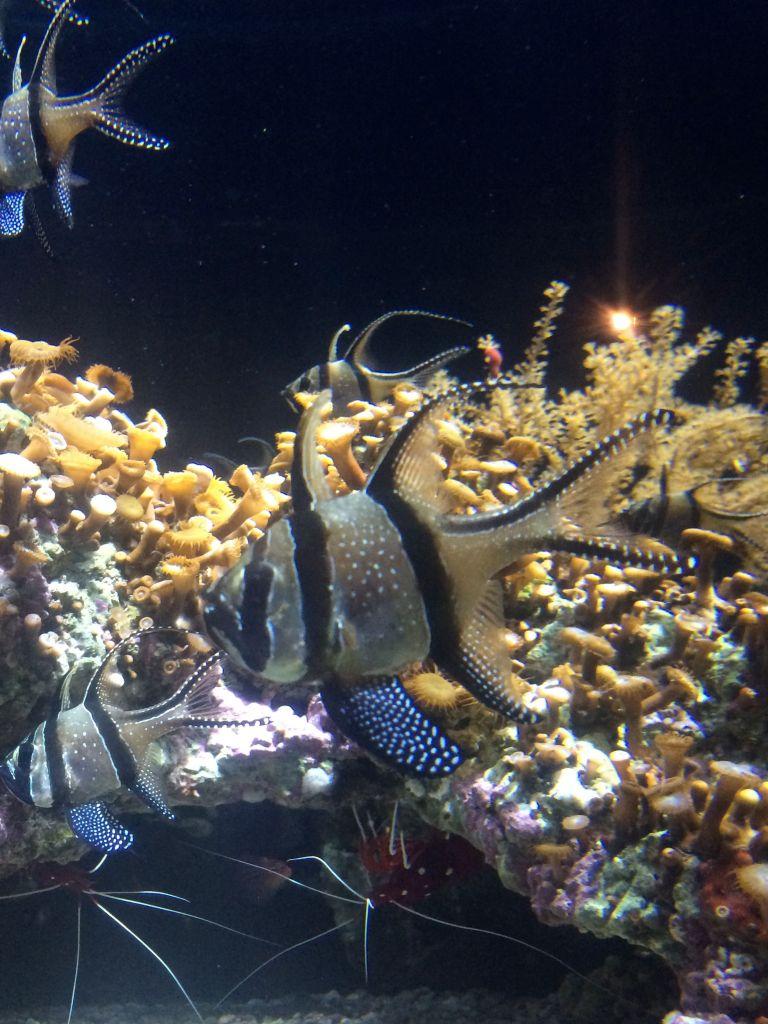 La_cite_de_la_mer_Aquarium_visite_coulisse_4