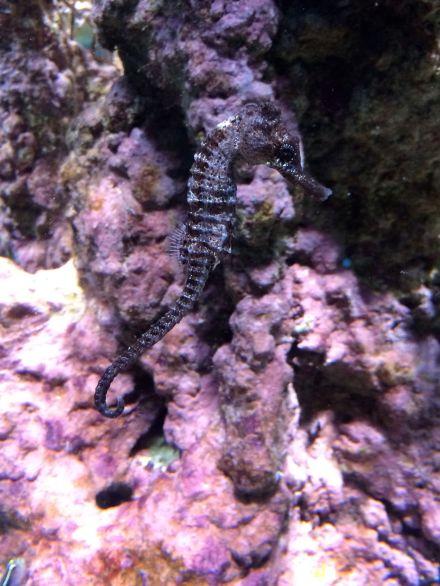 La_cite_de_la_mer_Aquarium_visite_coulisse_7