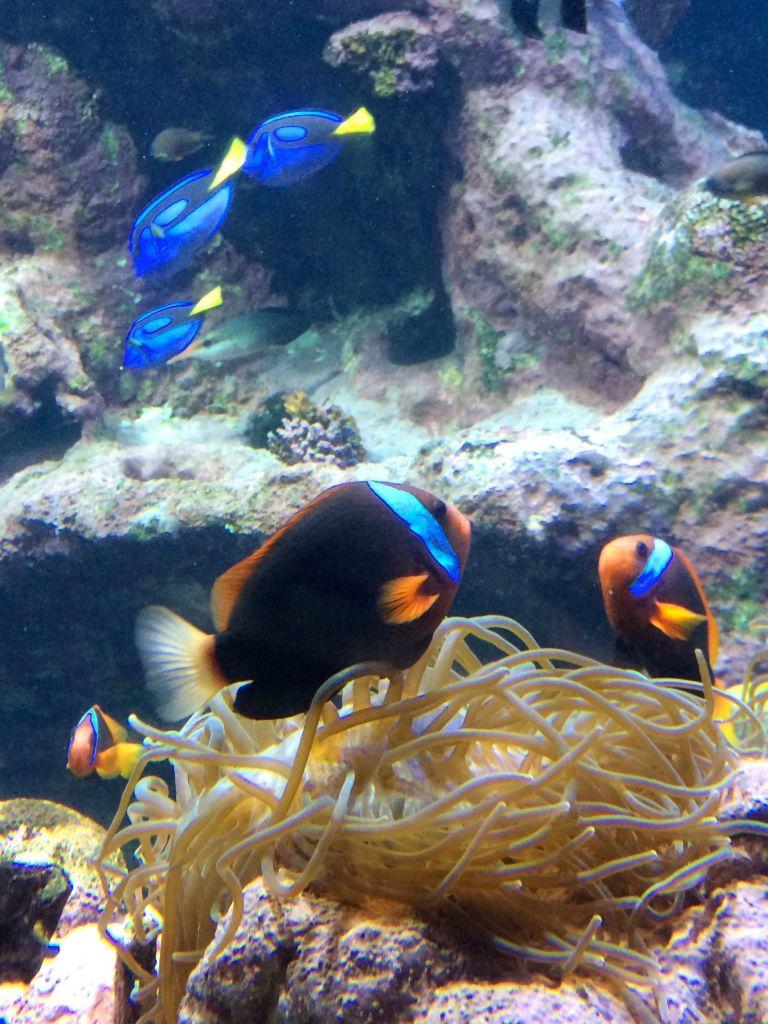 La_cite_de_la_mer_Aquarium_visite_coulisse_8