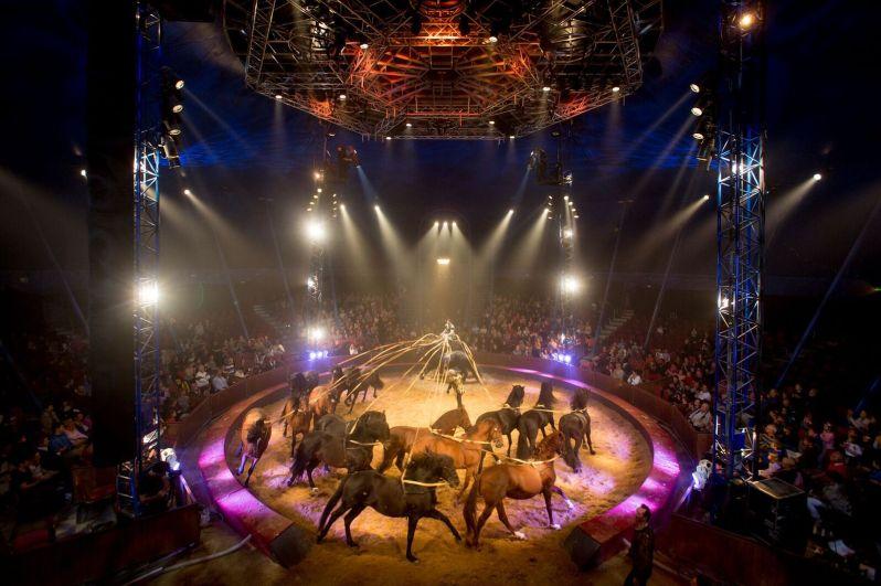 ldda_spectacle_alexis-gruss_quintessence2016_chevaux_karim-el-dib