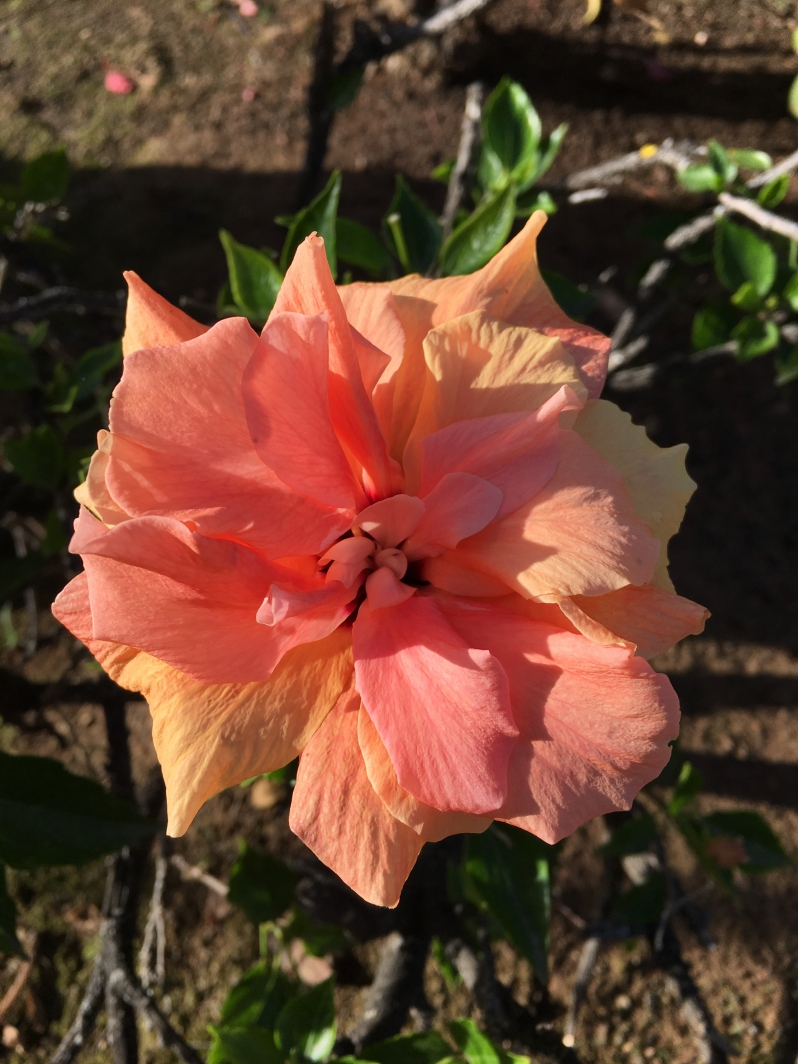 ldda_canaries_fleurs