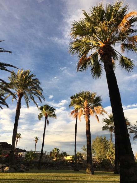 ldda_canaries_jardin_palmiers