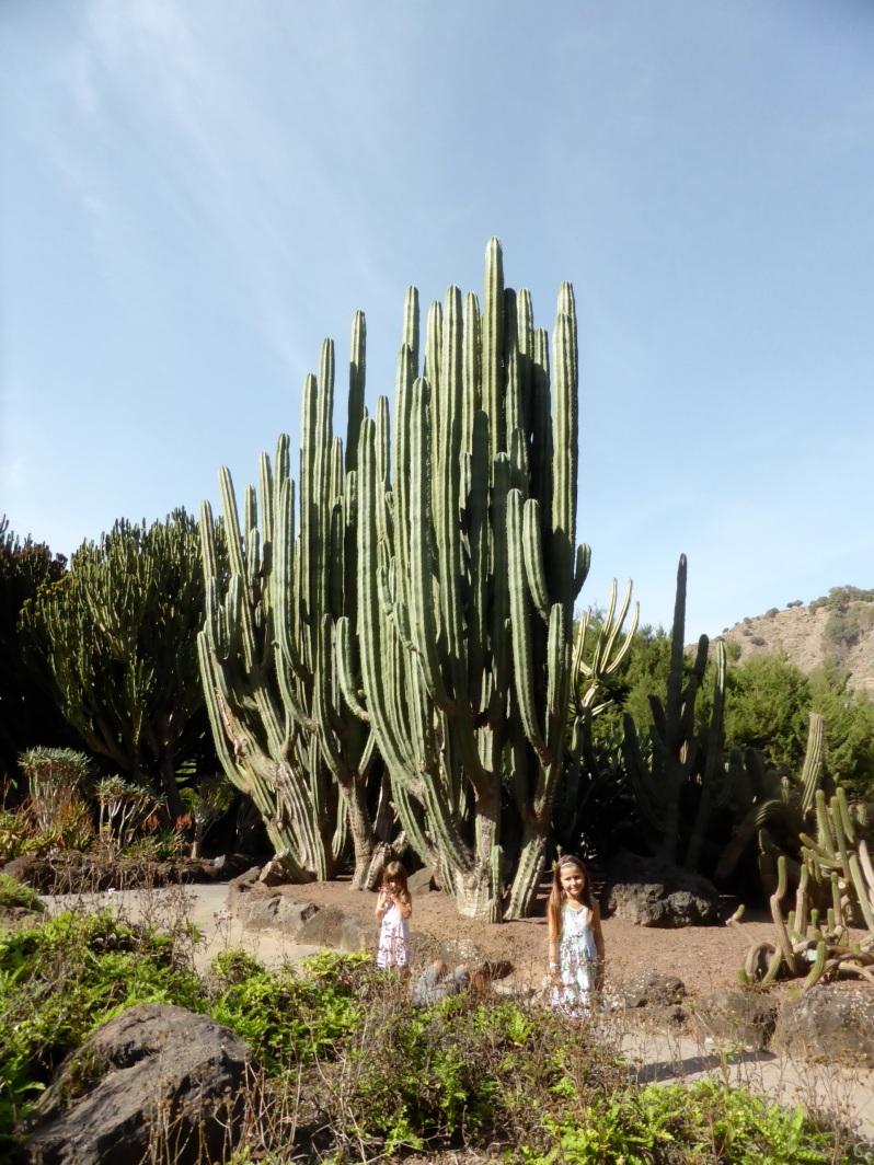 ldda_canaries_nord_jardin_botanique_cactus_geants1