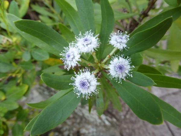 ldda_canaries_nord_jardin_botanique_fleurs