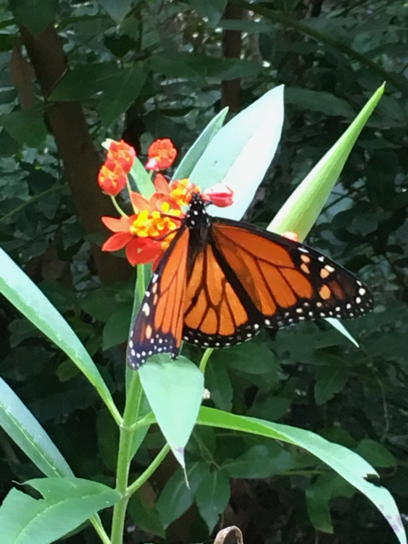 ldda_canaries_nord_jardin_botanique_papillon